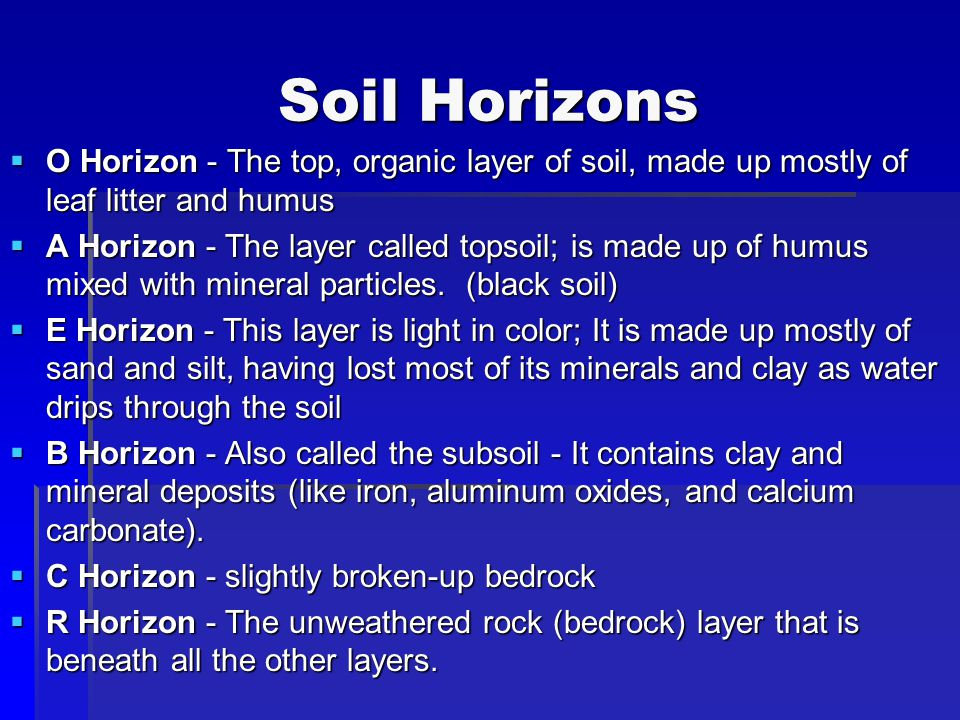 Soil Horizons O Horizon - The top, organic layer of soil, made up mostly of leaf litter and humus.