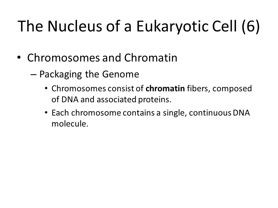 The Nucleus of a Eukaryotic Cell (6)
