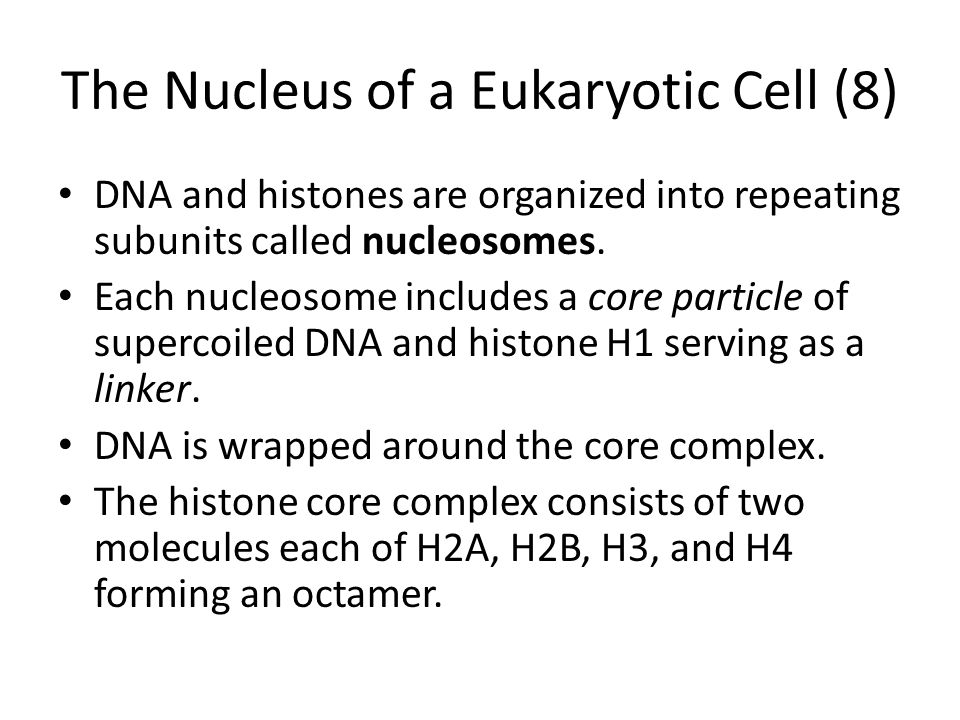 The Nucleus of a Eukaryotic Cell (8)