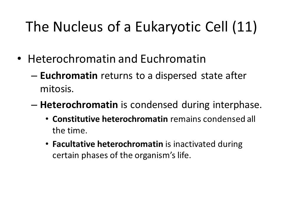 The Nucleus of a Eukaryotic Cell (11)