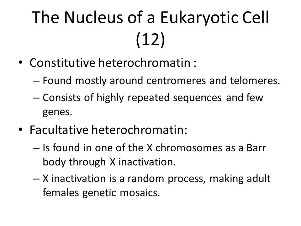 The Nucleus of a Eukaryotic Cell (12)