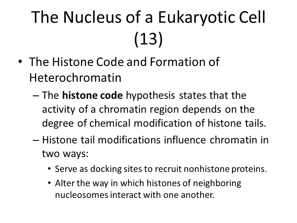 The Nucleus of a Eukaryotic Cell (13)