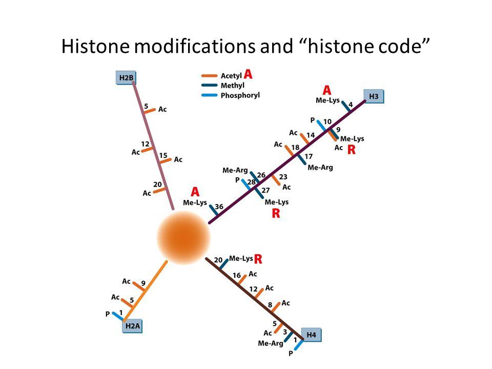 Histone modifications and histone code