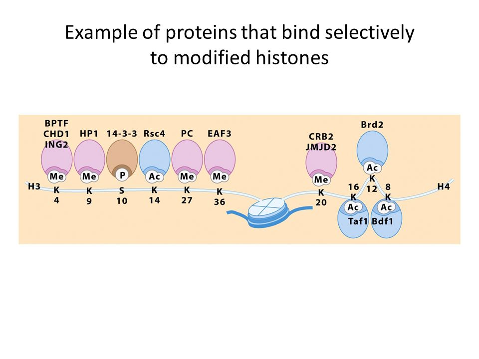 Example of proteins that bind selectively to modified histones