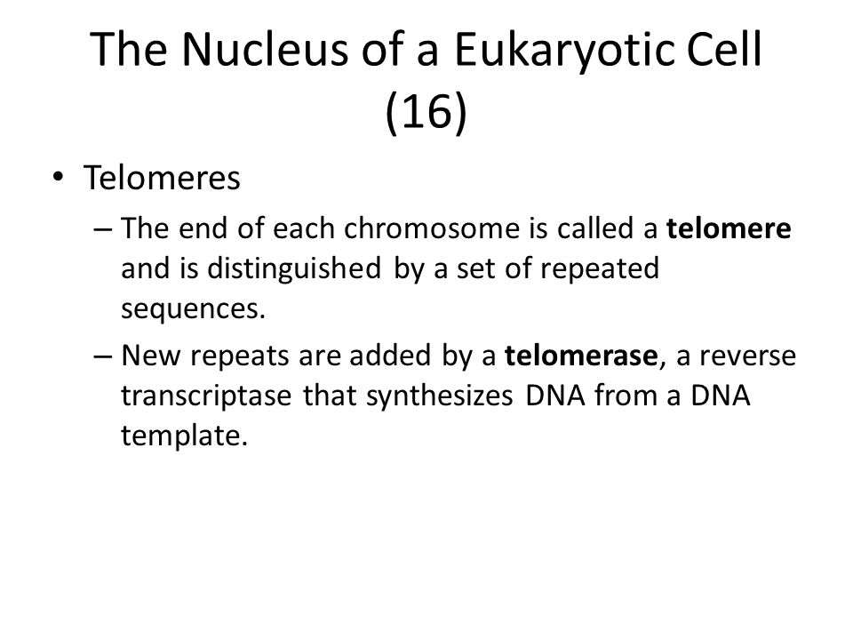 The Nucleus of a Eukaryotic Cell (16)