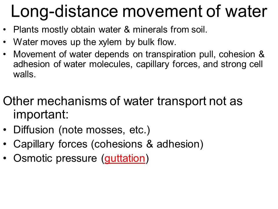 Long-distance movement of water