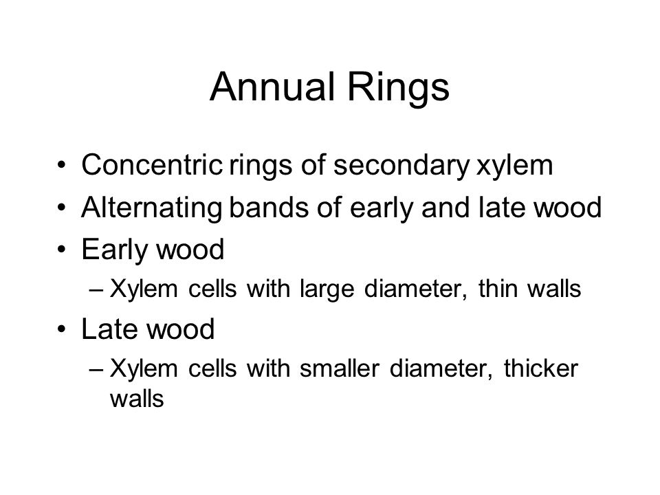 Annual Rings Concentric rings of secondary xylem