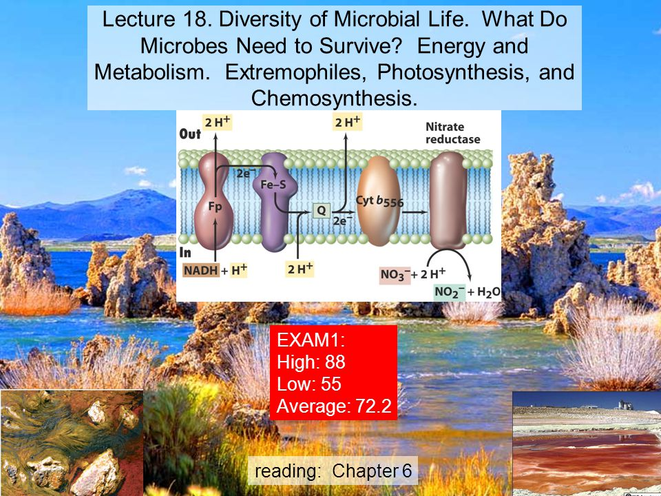 Lecture 18. Diversity of Microbial Life
