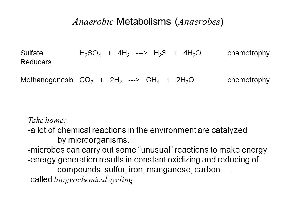 Anaerobic Metabolisms (Anaerobes)