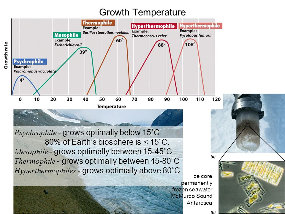 Growth Temperature Psychrophile - grows optimally below 15˚C