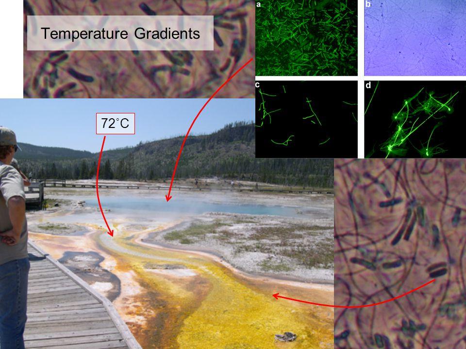 Temperature Gradients