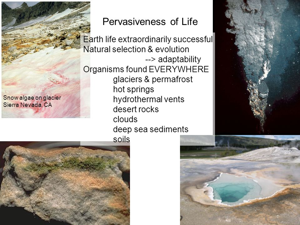 Pervasiveness of Life Earth life extraordinarily successful