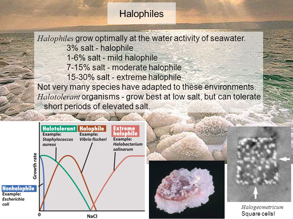 Halophiles Halophiles grow optimally at the water activity of seawater. 3% salt - halophile. 1-6% salt - mild halophile.