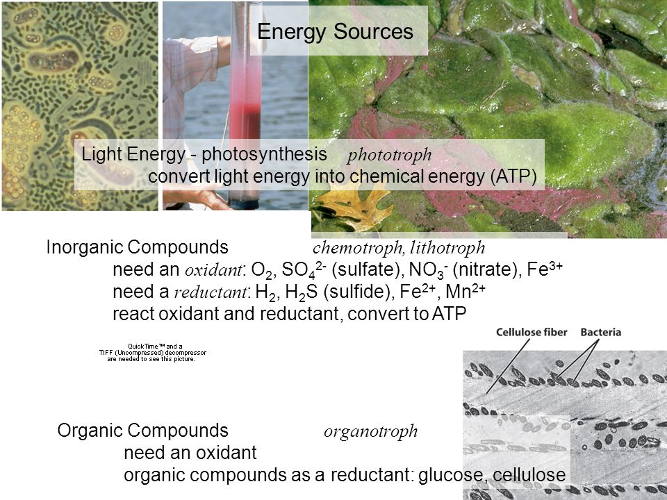 Energy Sources Light Energy - photosynthesis phototroph