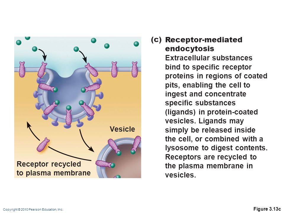 Extracellular substances bind to specific receptor