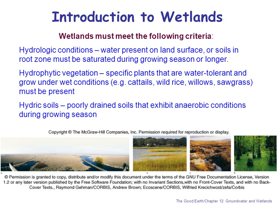 Introduction to Wetlands
