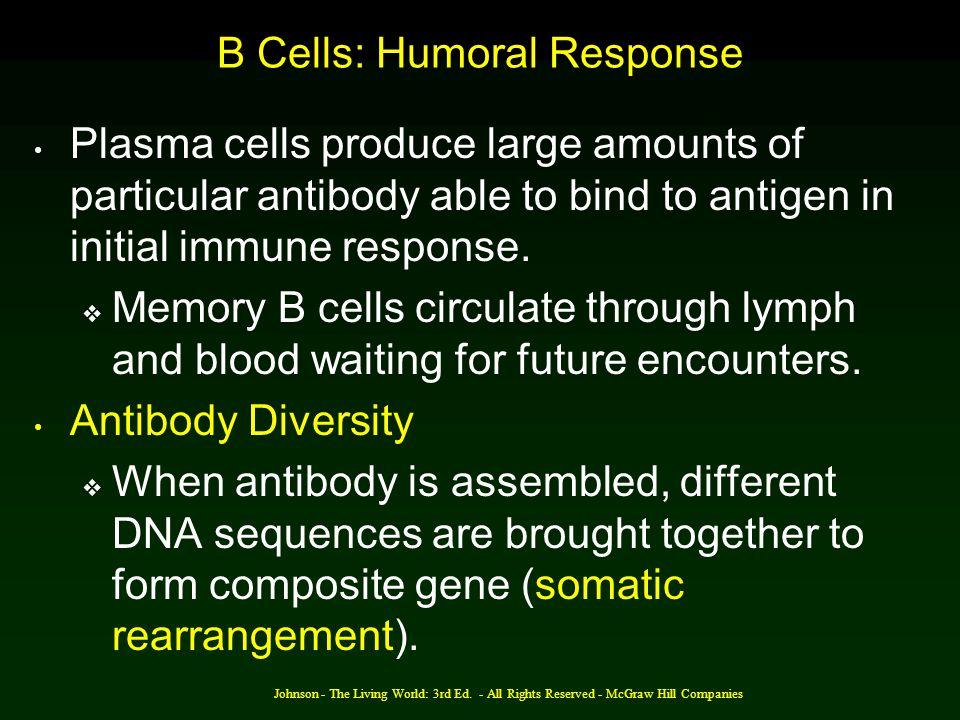 B Cells: Humoral Response