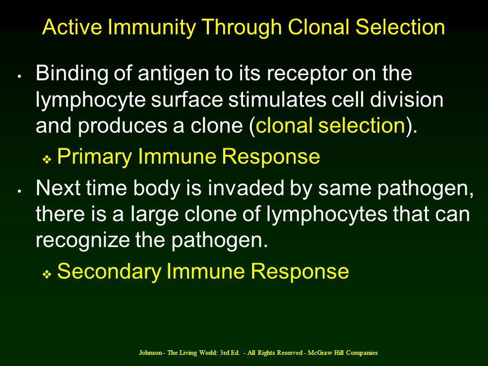 Active Immunity Through Clonal Selection
