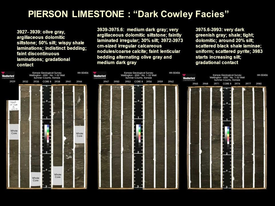 PIERSON LIMESTONE : Dark Cowley Facies