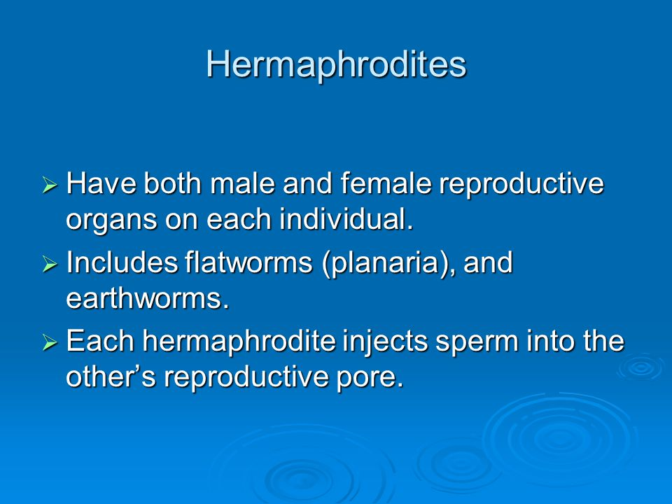 Hermaphrodites Have both male and female reproductive organs on each individual. Includes flatworms (planaria), and earthworms.