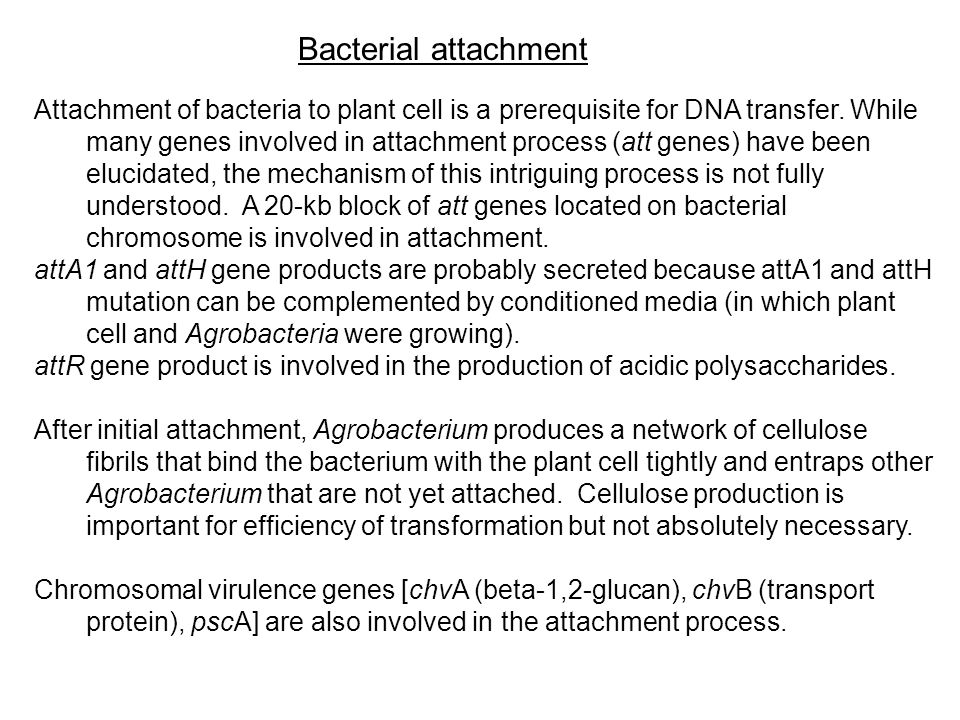 Bacterial attachment