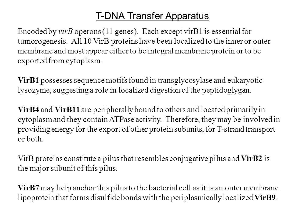 T-DNA Transfer Apparatus