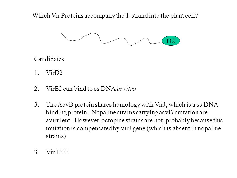 Which Vir Proteins accompany the T-strand into the plant cell