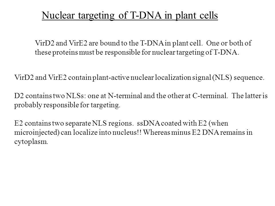Nuclear targeting of T-DNA in plant cells