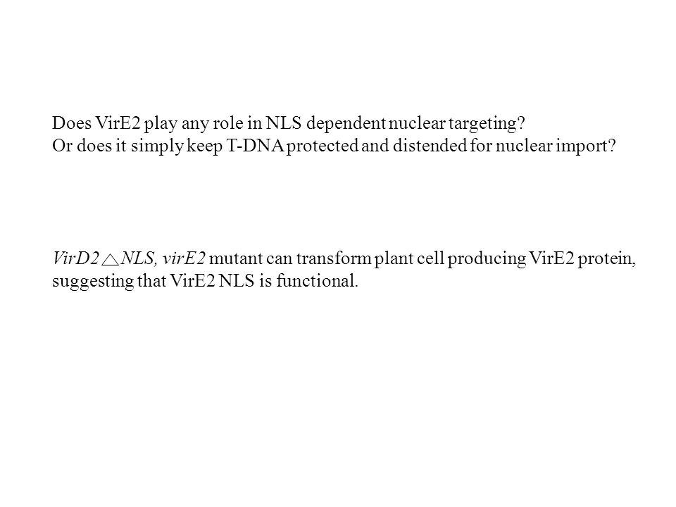 Does VirE2 play any role in NLS dependent nuclear targeting