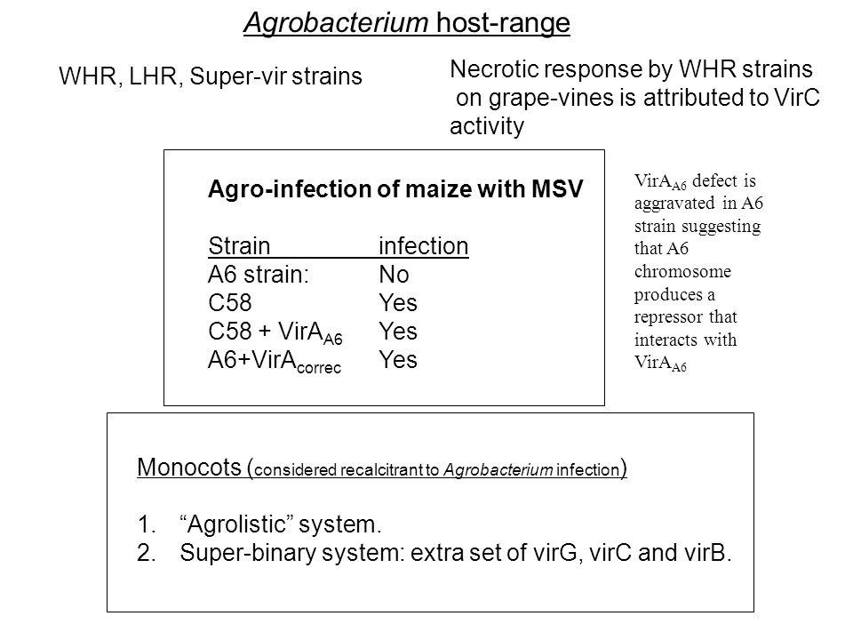 Agrobacterium host-range