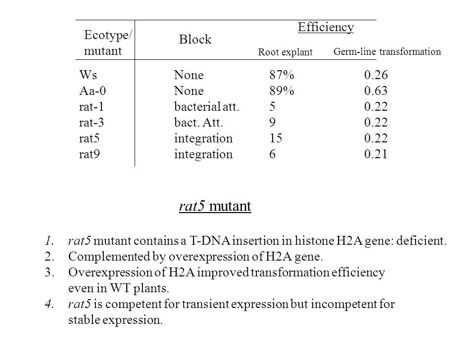 rat5 mutant Efficiency Ecotype/ Block mutant Ws None 87% 0.26