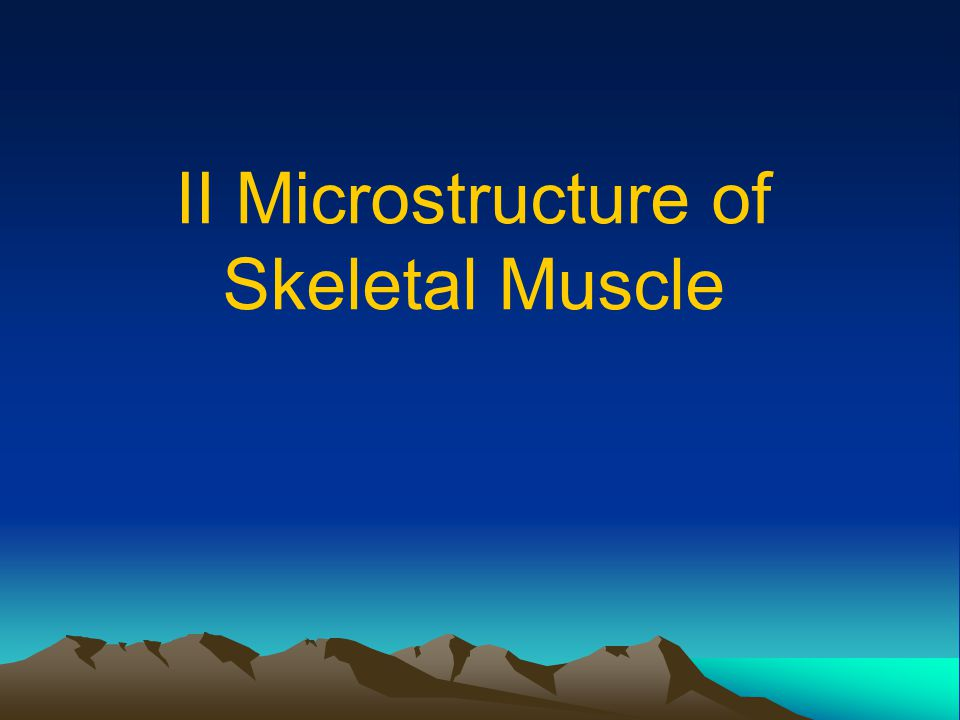 II Microstructure of Skeletal Muscle