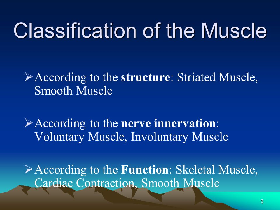 Classification of the Muscle