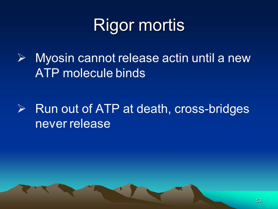 Rigor mortis Myosin cannot release actin until a new ATP molecule binds.