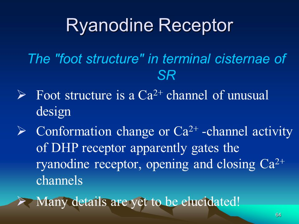 The foot structure in terminal cisternae of SR