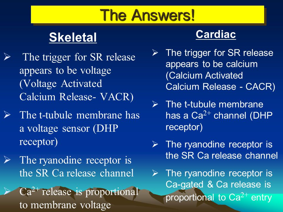 The Answers! Skeletal Cardiac