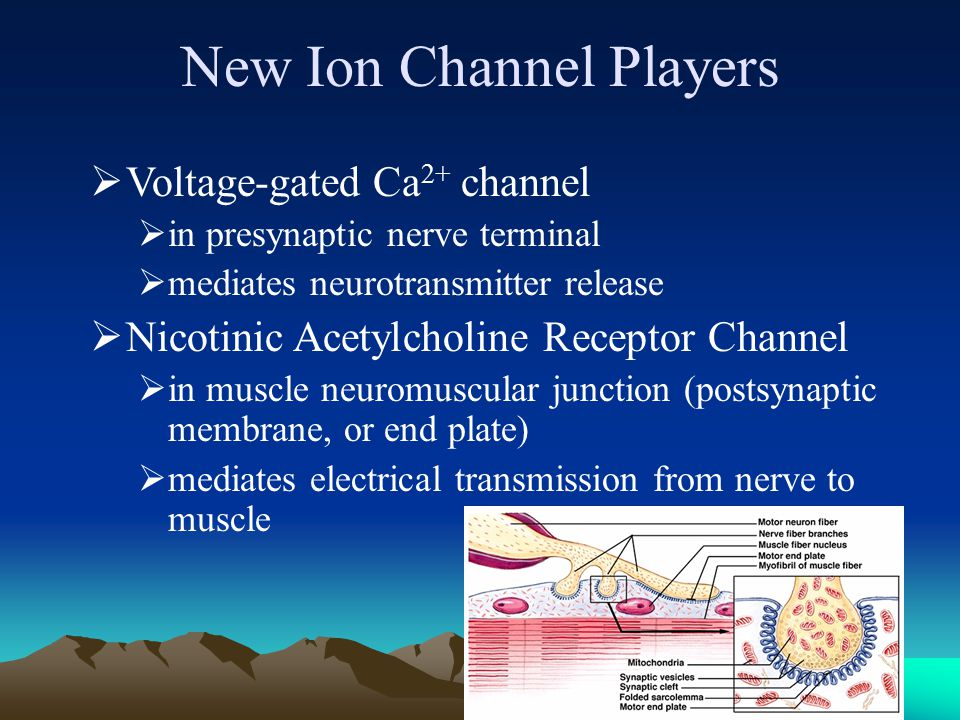 New Ion Channel Players