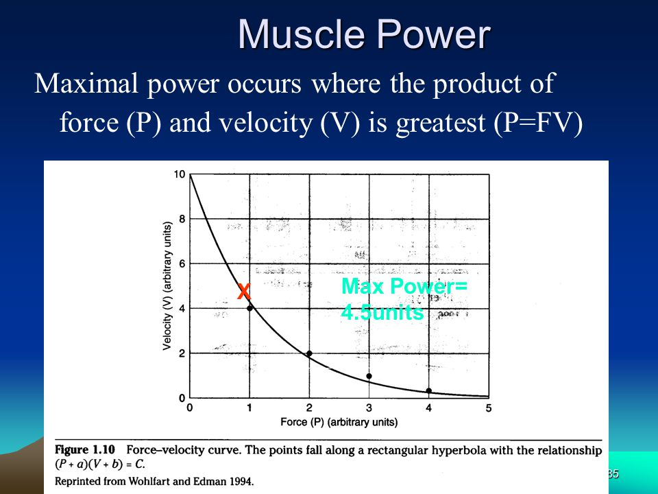 Muscle Power Maximal power occurs where the product of force (P) and velocity (V) is greatest (P=FV)