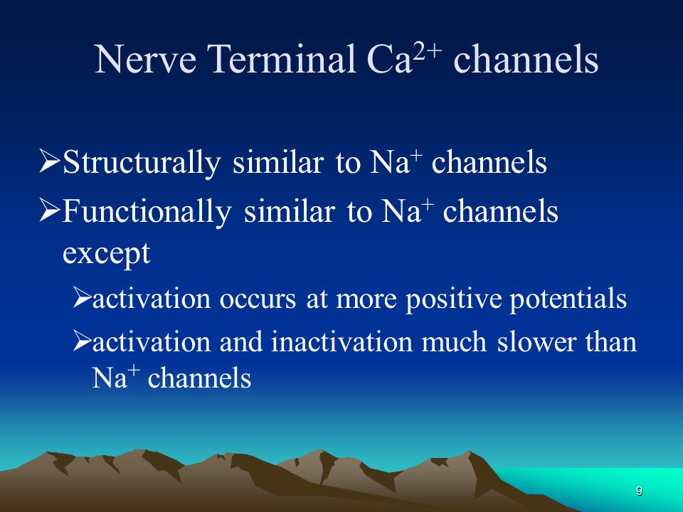 Nerve Terminal Ca2+ channels