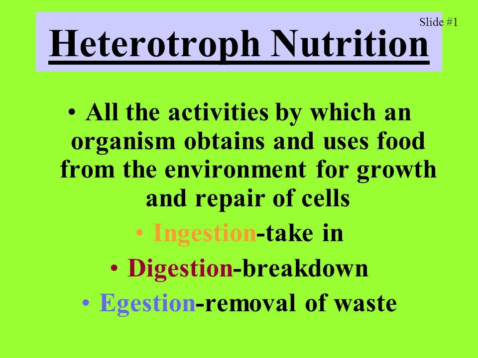 Heterotroph Nutrition