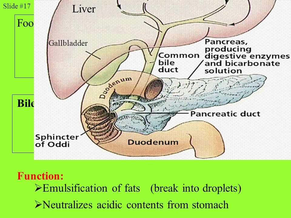 Pancreatic juices from pancreas (*enzymes*)