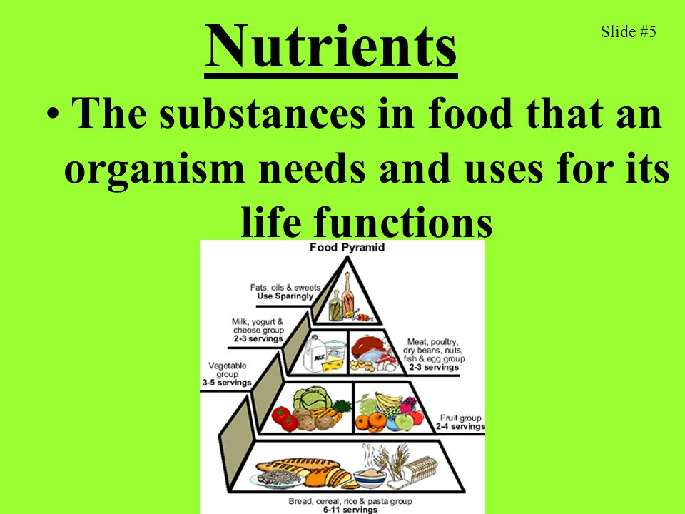 Nutrients Slide #5 The substances in food that an organism needs and uses for its life functions
