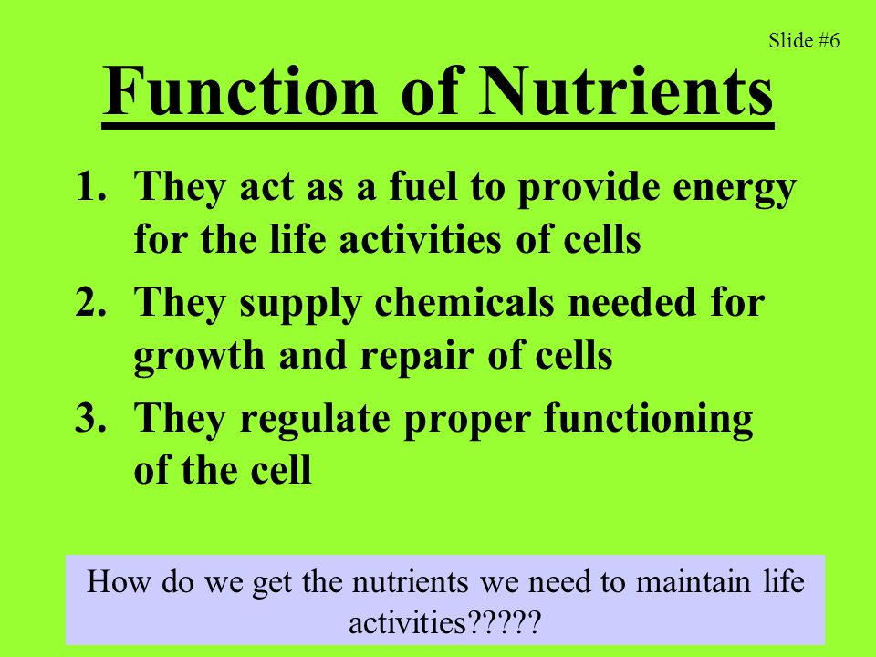 How do we get the nutrients we need to maintain life activities