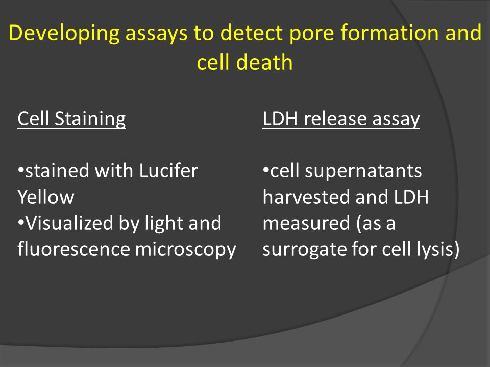 Developing assays to detect pore formation and cell death