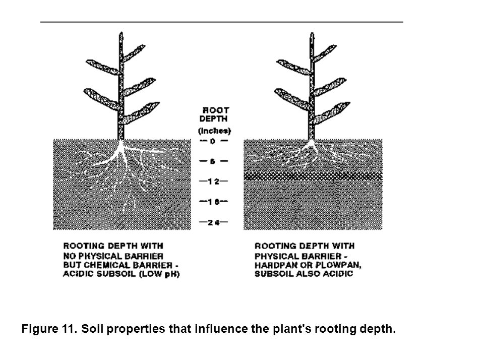 Figure 11. Soil properties that influence the plant s rooting depth.