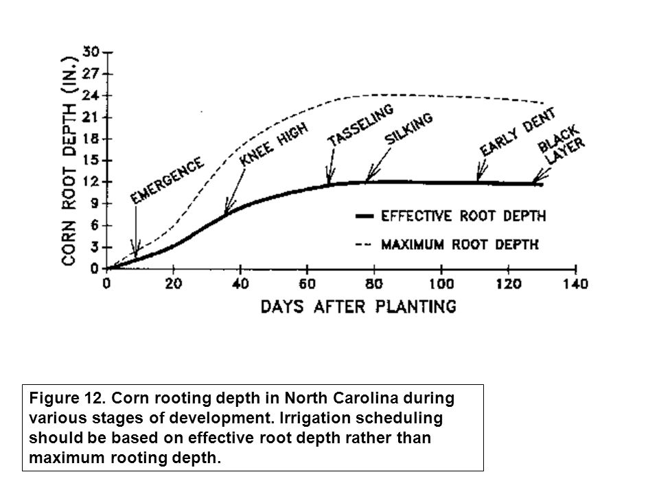 Figure 12. Corn rooting depth in North Carolina during various stages of development.