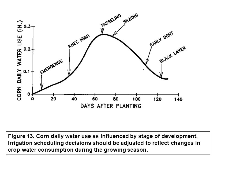 Figure 13. Corn daily water use as influenced by stage of development