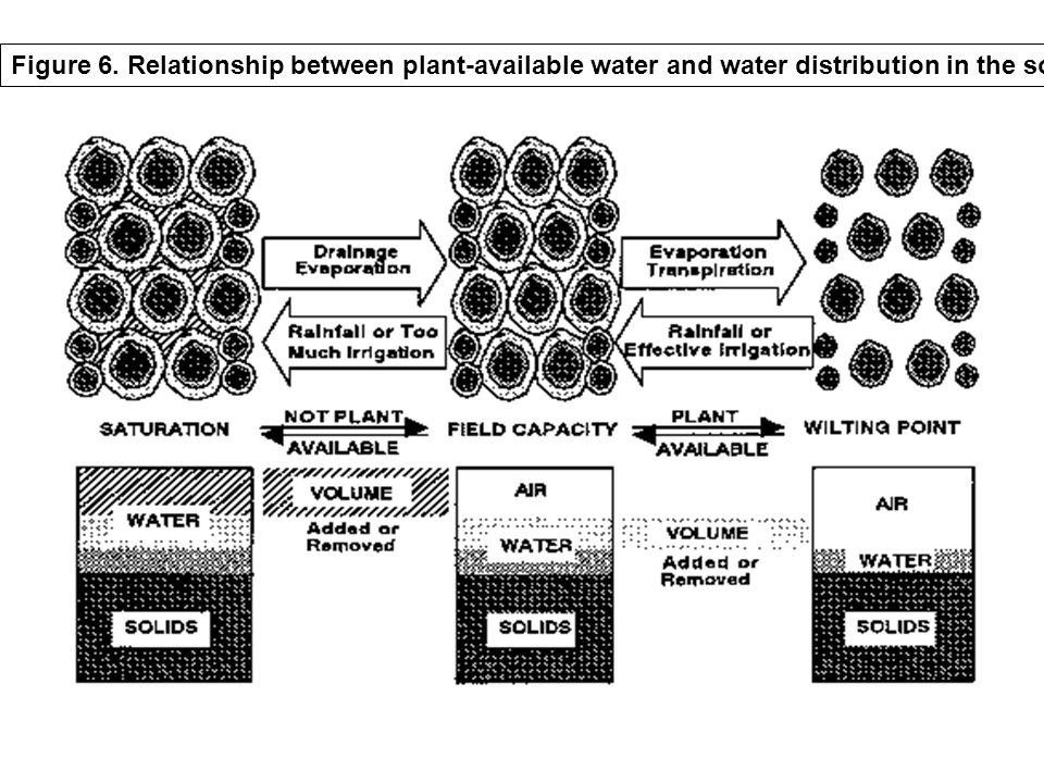 Figure 6. Relationship between plant-available water and water distribution in the soil.