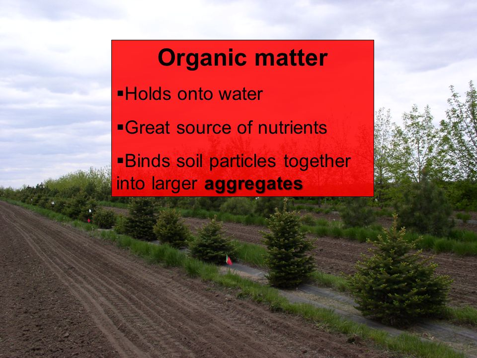 Organic matter Holds onto water Great source of nutrients