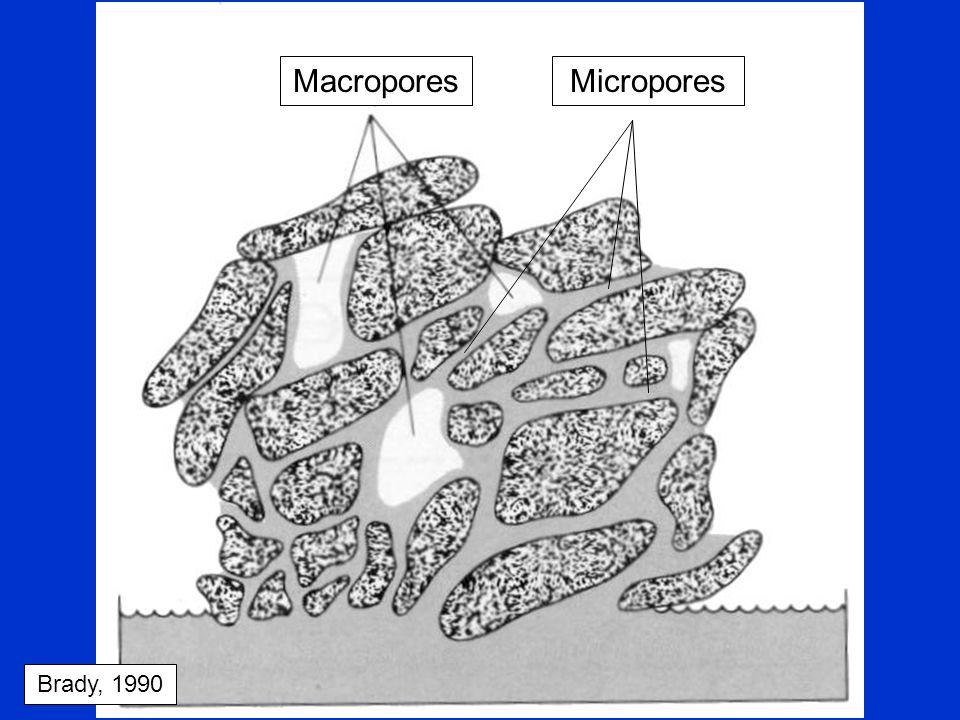 Macropores Micropores Brady, 1990